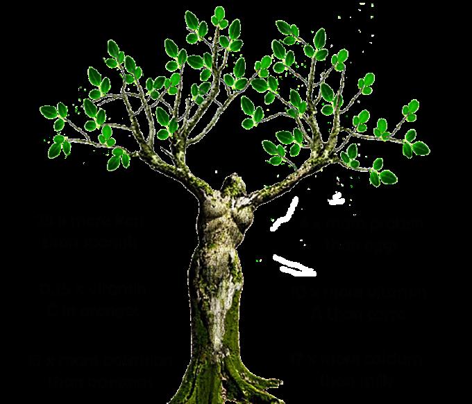 moringa-oleifera-tree.png